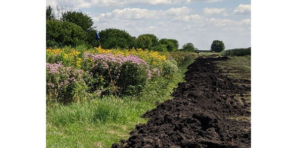 Farmers and landowners who want to increase pollinator habitat while also improving water quality should consider the benefits of saturated riparian buffers enhanced with native wildflowers. (Courtesy of ISU Extension and Outreach)