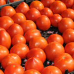 K-State Research and Extension and the Kansas Department of Agriculture are offering educational sessions for fresh produce growers in three locations in Kansas and northwest Missouri. (Courtesy of K-State Research and Extension)