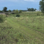 This natural landscape has never been plowed for agriculture, and is home to some rare plant species and wildlife, including prickly pear cactus and sand bur-reed. (Courtesy of ISU Extension and Outreach)