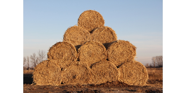 Wet conditions during haying may have reduced the quantity and quality of hay this year. (NDSU photo)