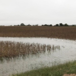 Figure 1. After recent rains, water stands in the border of this Filmore County soybean field. While wet conditions across much of the state will complicate harvest, taking steps to avoid compaction can reduce the challenges for future crops. (Photo by Brandy VanDeWalle)