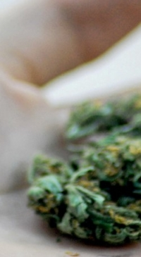 Illegal pot farms on public land create hazards