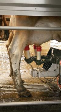 NMC webinar addresses protocols for optimal milk quality