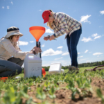 Tracy Campbell (left), a research assistant in the Department of Agronomy, and research intern Emily Marrs install funnel systems to collect irrigation water in a pea field at Isherwood Farm near Plover, Wis. (Photos by Michael P. King)
