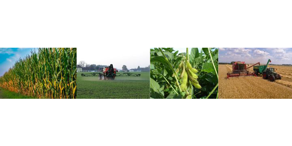 The 21st annual Integrated Crop and Pest Management Update for Agribusiness will feature 2020 MSU crop and pest recommendations, on-farm research data and pesticide certification credits. (Courtesy of MSU Extension)