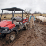 Rex Ricketts negotiates mud as he unloads cattle feed at his farm near Hallsville, Mo. The Missouri Livestock Symposium will award the retired University of Missouri animal sciences professor the Ag Educator Lifetime Achievement Award at its 2019 symposium Dec. 6-7 in Kirksville. (Photo by Rob Hill, Mizzou Magazine)