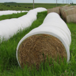 According to Iowa State University Extension and Outreach specialists, producers who still need to put up hay this fall may want to consider making baleage as an option for dealing with cold and wet weather conditions. (Courtesy of ISU Extension and Outreach)