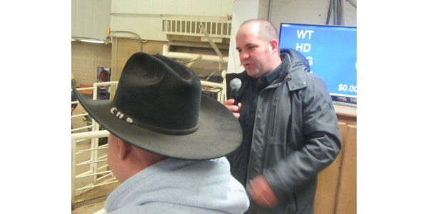 Dr. Jared Decker, state extension and research specialist for University of Missouri makes brief comments on the merits of genomic testing prior to the sale. (Photo credit: MU Extension)