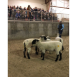 Sheep evaluation during a recent FFA contest at the Nebraska College of Technical Agriculture. (Photo by Annie Bassett, NCTA student)
