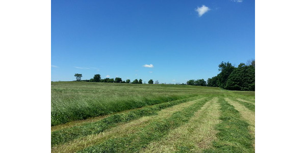 Selecting forage species and mixtures for hayfields and pastures may seem overwhelming. Let this new bulletin help you make decisions. (Photo by Kim Cassida, MSU Extension)