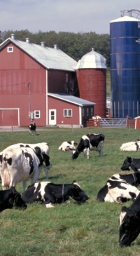 Price Risk Management for Dairy Farmers