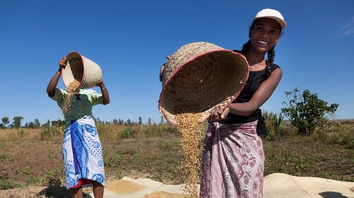 World food prices jump in November