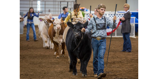Kda Issues Guidance For Livestock Shows Morning Ag Clips