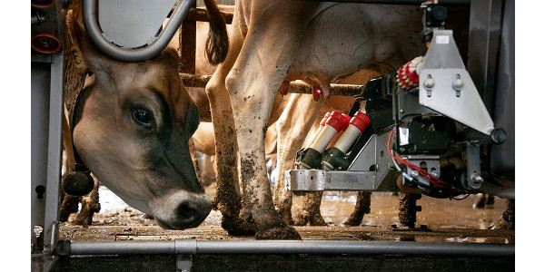 Dairy groups call for USDA food purchases, relief