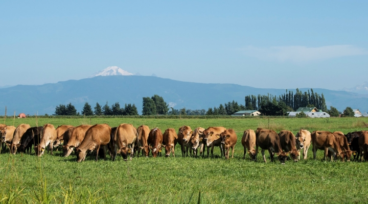 Dairy Grazing Apprenticeship Approved For Financial