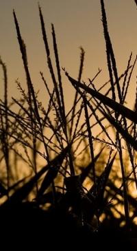 U.S. farm & biofuel leaders urge Trump stand by RFS