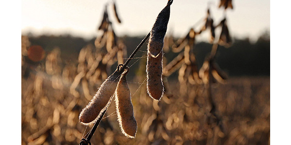 Missouri Soybean releases research report