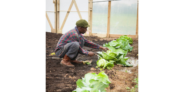 Urban ag and community compost funding