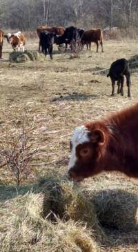 What would it take to scale up pastured meat production?