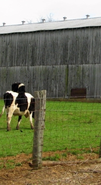 Penn State Dairy Science Club excels at ADSA virtual meetings