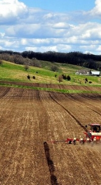 Corn planted acreage up 3% from 2019