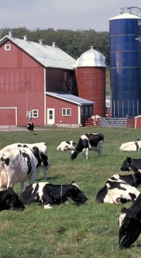 May margin triggers Dairy Margin Coverage payment