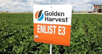 Enlist E3 soybeans provide flexibility, weed management options