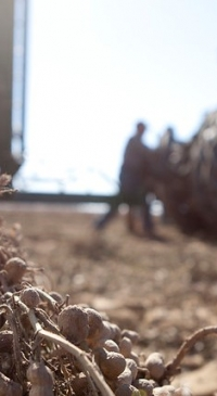 USDA announces Peanut Standards Board appointments