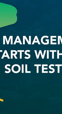 Successful management of SCN starts with a soil test