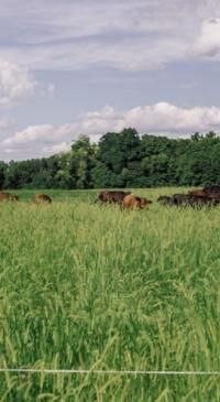 Regenerative grazing online series