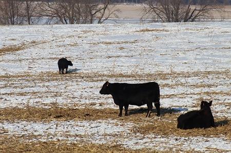 Prepare Livestock for Cold Weather
