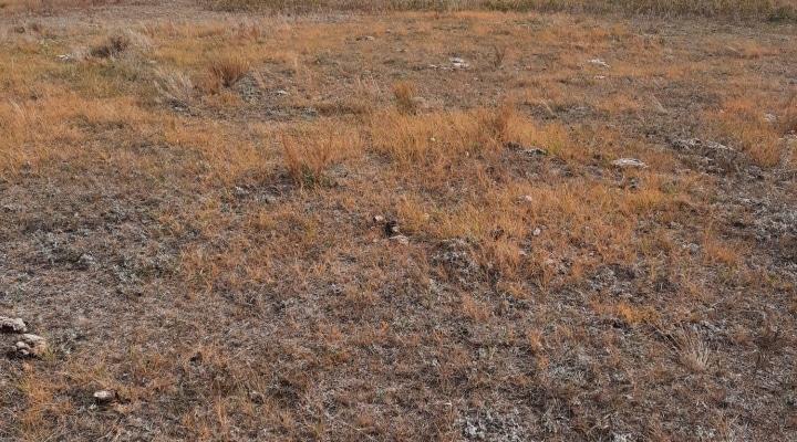 Drought Plain