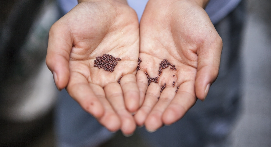 Celebrate National Seed Swap Day, Jan. 30th!