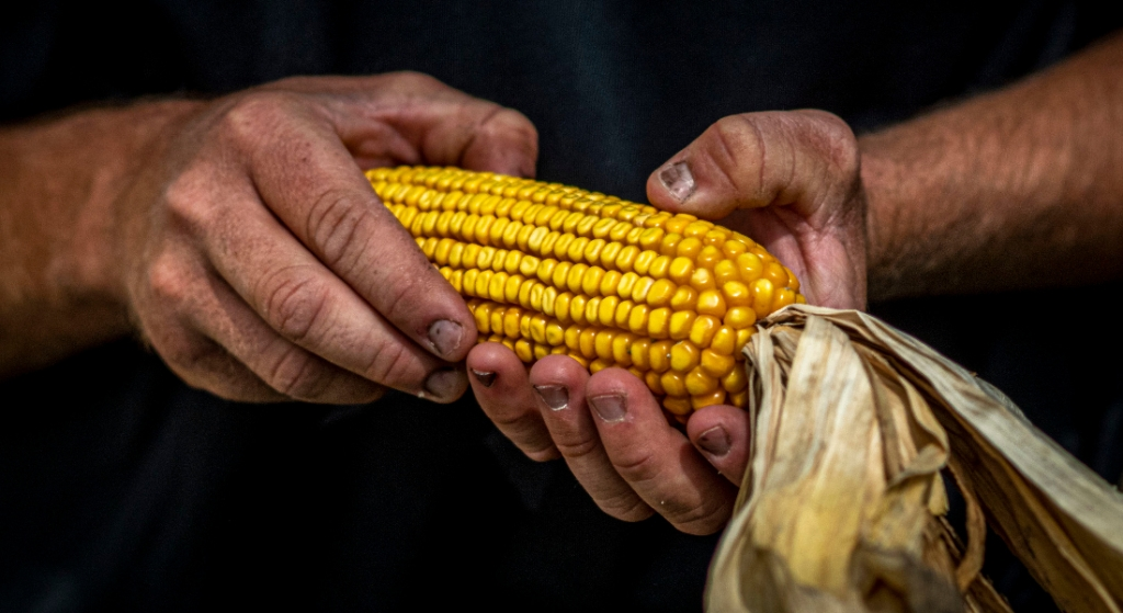 NCGA leads call for farmer participation in Paycheck Protection Program