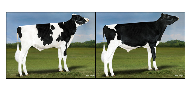 Holstein Marketplace Sires launches two new bulls