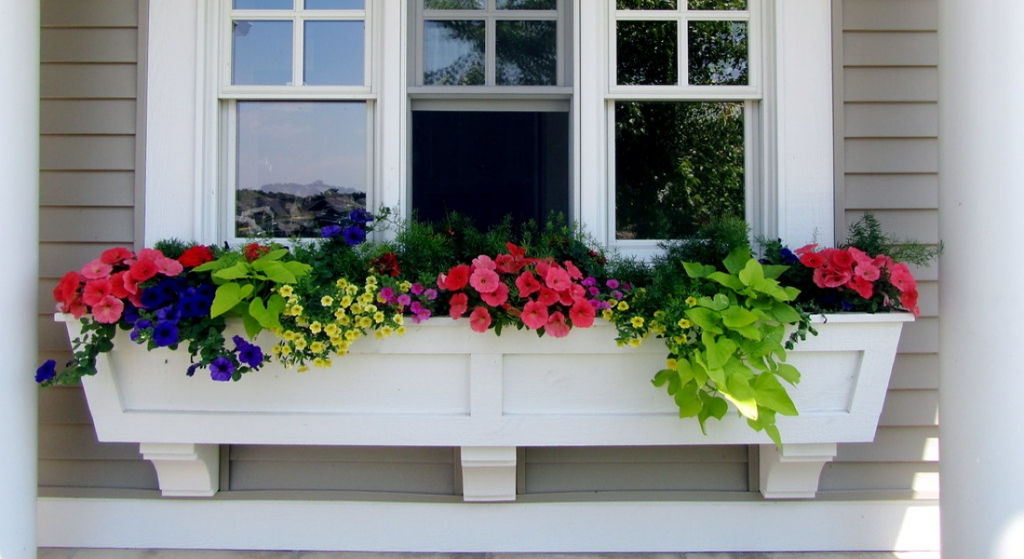 Going beyond the traditional window-box garden