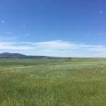 Range Grassland