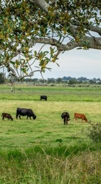 USDA seeks nominees for Cattlemen's Beef Board