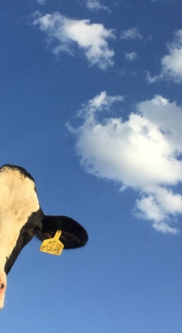 Central Plains Dairy Foundation awards seven grants for projects