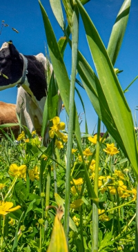 Rotational Grazing Workshop, July 26th