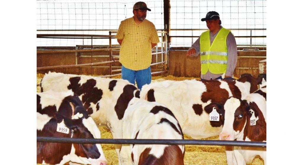 Calm cows = happy producing cows