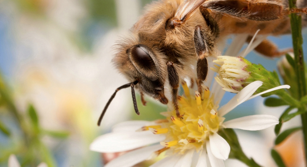 Pollens to fit a honeybee's every season