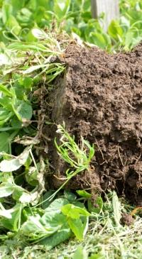 Comments sought on soil health practices