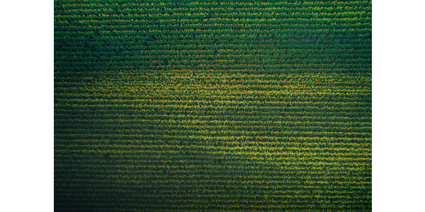 USDA to gather monthly yield data to measure crop production