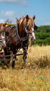 Draft Animal-Power Field Days coming this fall