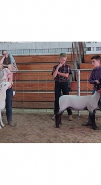 2021 Allegany County Fair Youth Sheep Show results