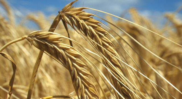 Global food prices decline in July