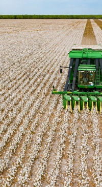 USDA forecasts US corn, soybean, cotton production up from 2020