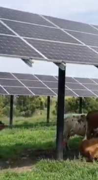 Power from pasture panels: agrivoltaics