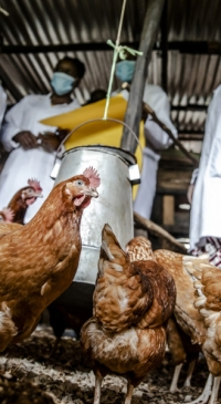 FAO launches new global system to address animal disease threats